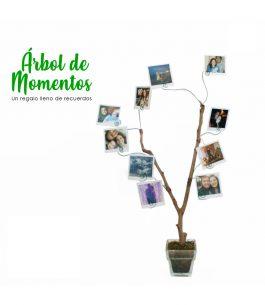 Árbol de los Recuerdos 20 Fotos